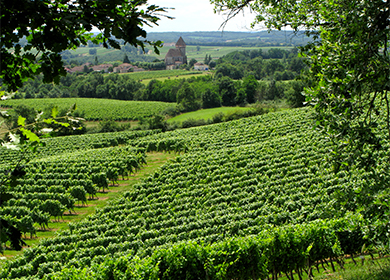 SAINT-MONT : Vignobles en course 2020